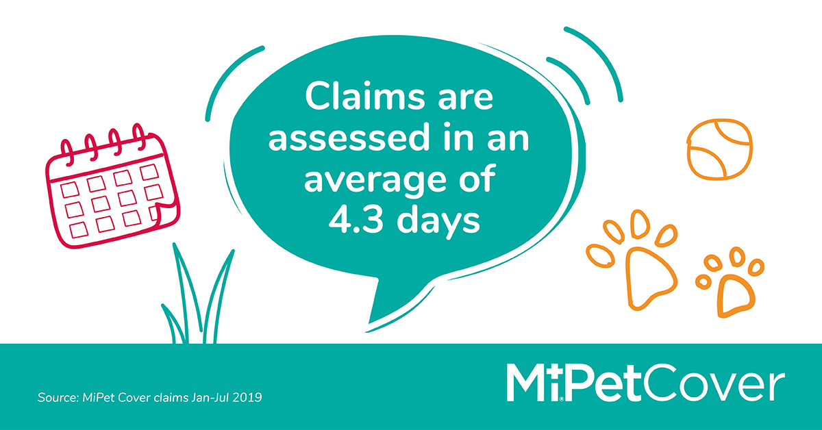When it comes to your pet's veterinary care, we don't want you to worry about the bills.  This is why we assess our policyholders' claims in a average of 4.3 days.   Let's get #morepetsinsured  To find out more, visit https://t.co/JkuDF0SIRJ  #cats #dogs #puppies #kittens #pets https://t.co/3dVZGLxxsJ