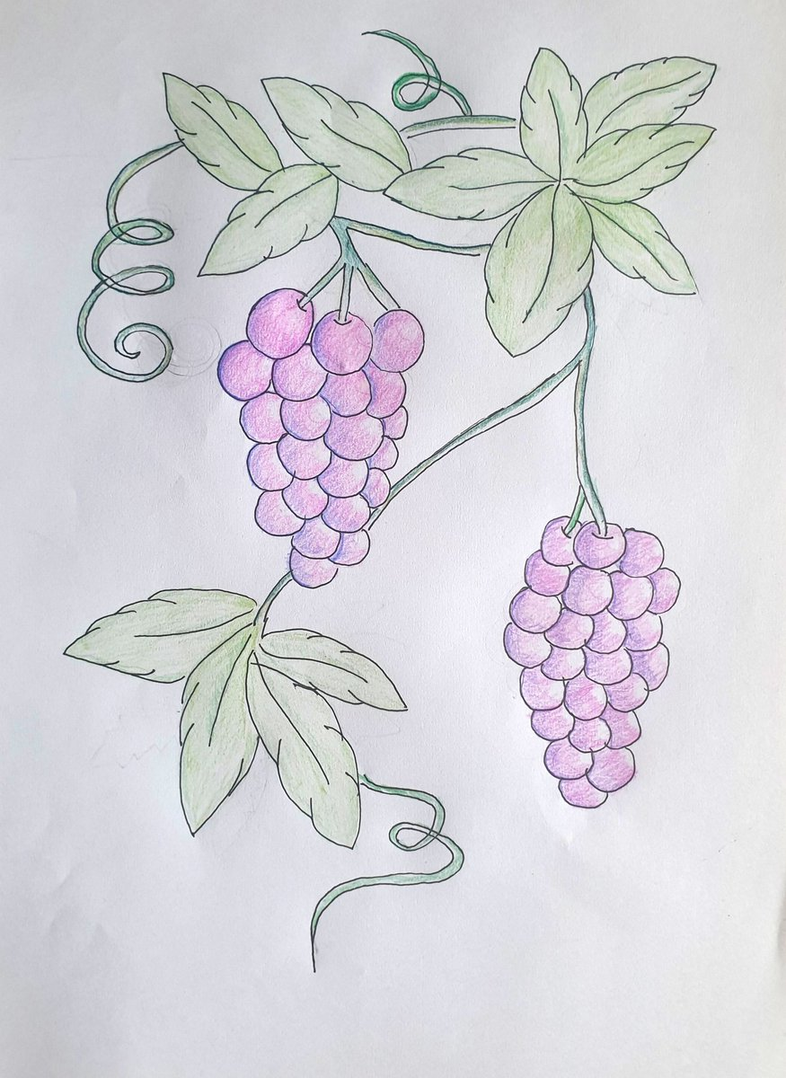 This is Maya's drawing of grapes on a vine from #TheIckabog @TheIckabog She is a big fan and would be thrilled if @jk_rowling would leave a comment... We can't wait for the next chapters! 😉 Love from India!