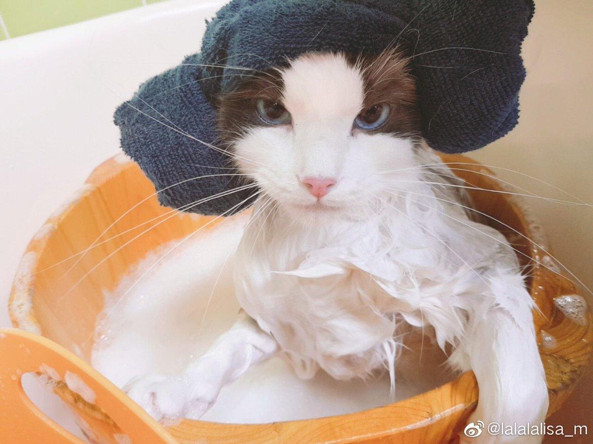"[WEIBO] LISA update:   ""Hurry and come look at my four cats""    http:// weibointl.api.weibo.com/share/15710308 0.html?weibo_id=4522300432613484  …   #LISA  #리사  #BLACKPINK  #블랙핑크  #LALISA #小莎 @BLACKPINK<br>http://pic.twitter.com/rpiboQJa3u"