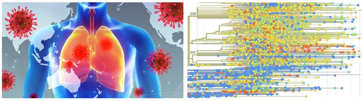 Para quien interese, hemos sacado otros dos informes en el Grupo #ISCIII de Análisis sobre #Coronavirus.   ▪️ Anticuerpos neutralizantes y #COVID19 👉 https://t.co/NWjRGhCcF7  ▪️ Evolución del #SARSCoV2 👉 https://t.co/N2JqDUhw3F  Está regular que yo lo diga, pero están chulos ;) https://t.co/IdVh7NlwQt