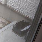 外に箱をおいたら、思いのほかガッツリ野良猫が箱にすっぽり入っていた!
