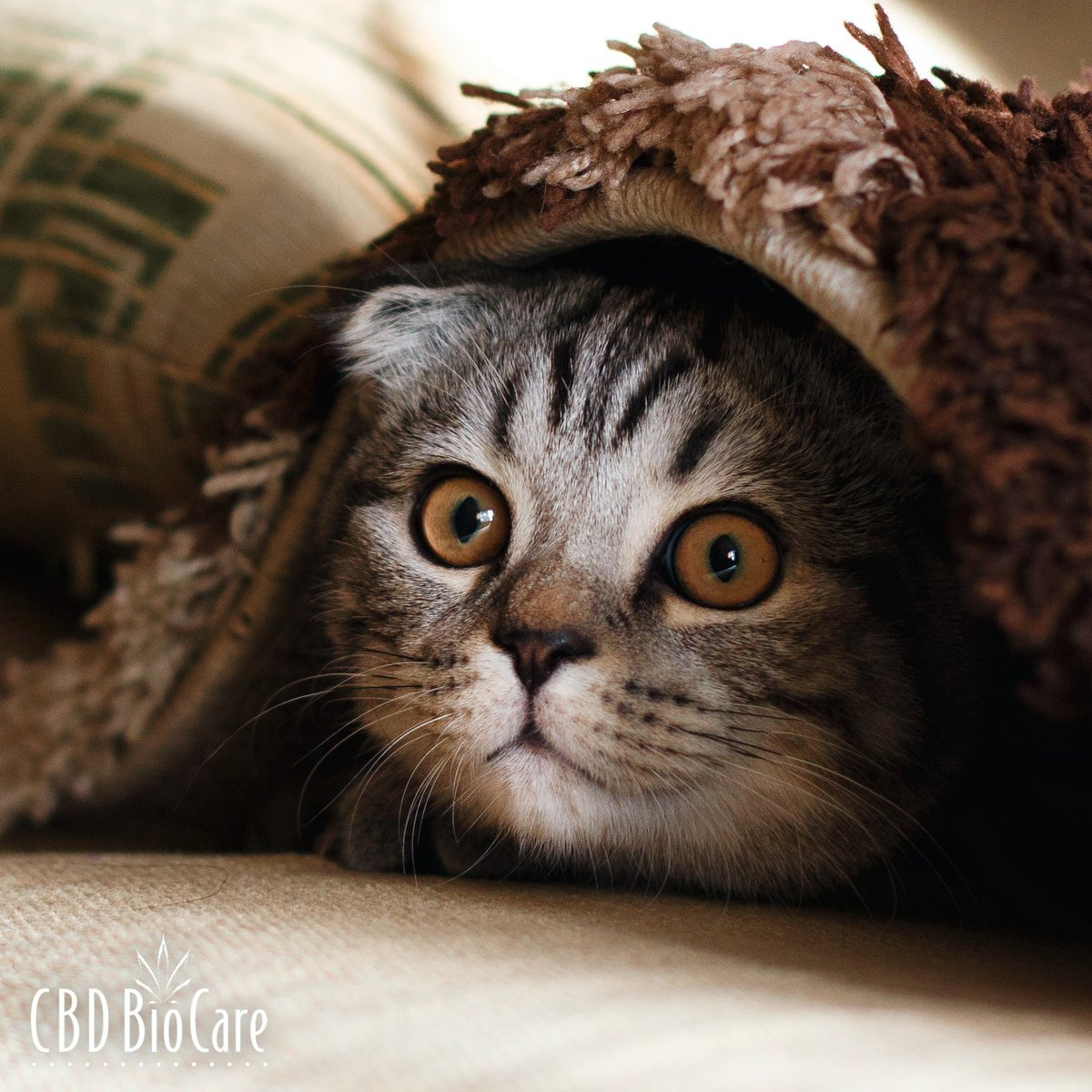 Pets & Fireworks Do your pets hide on July 4th? CBD can help calm fear & anxiety. Give them CBD 30 minutes before the fireworks. Use my coupon code novo to save 5%.  https:// tinyurl.com/yazt8t7r     #cbdbiopetcare #cbdpetproducts #cbdbenefits #cbdforanxiety #cbdforsleep #cbdforpets #petcbd<br>http://pic.twitter.com/lSPeAqHyqA