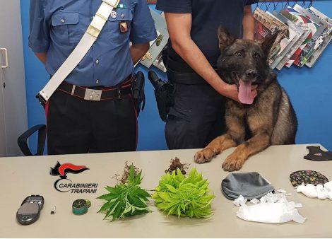 Il cane carabiniere Ron in giro per Erice, sequestrata droga in immobili abbandonati - https://t.co/1jFJFicGIL #blogsicilianotizie