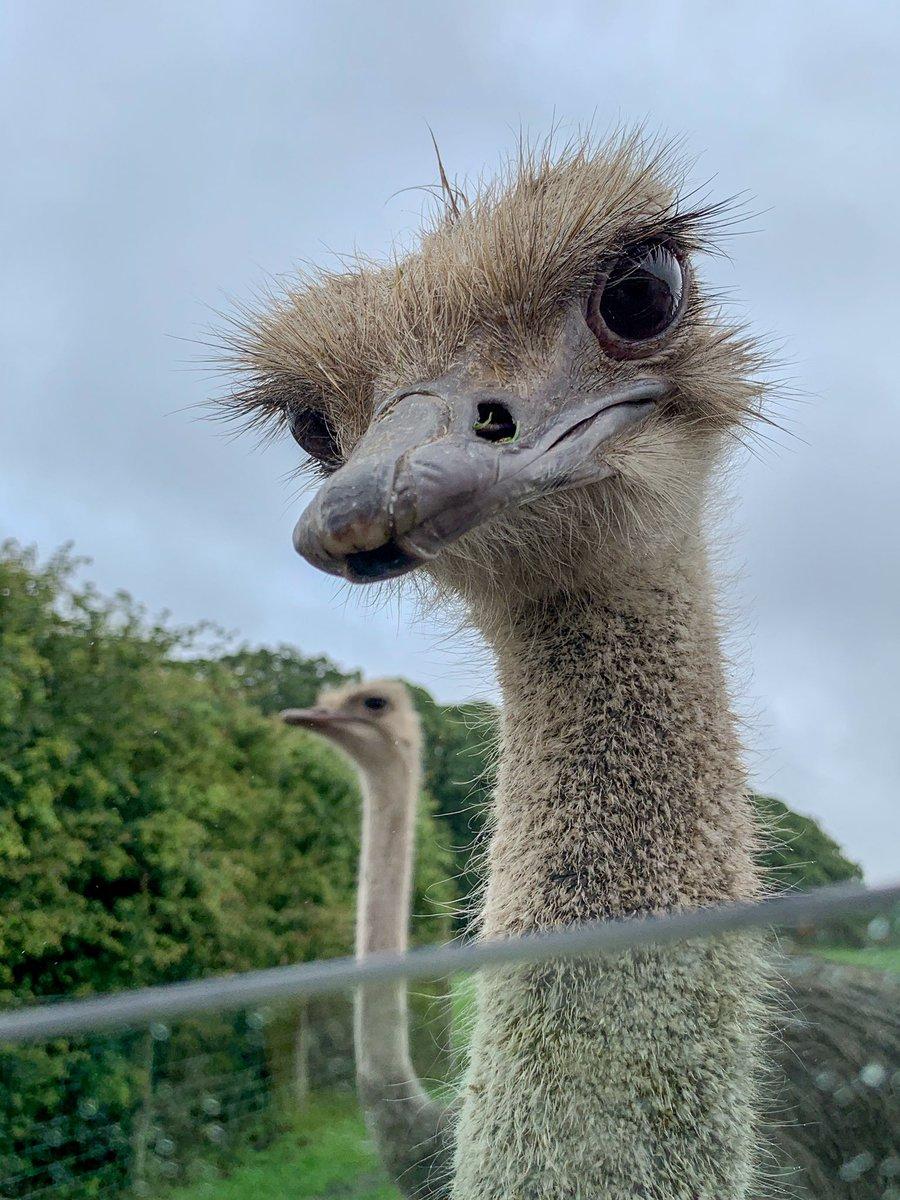 What you looking at dude?! #KnowsleySafari #KnowsleySafariPark #Ostrich @KnowsleySafaripic.twitter.com/M55y4JEIXT – at Knowsley Safari