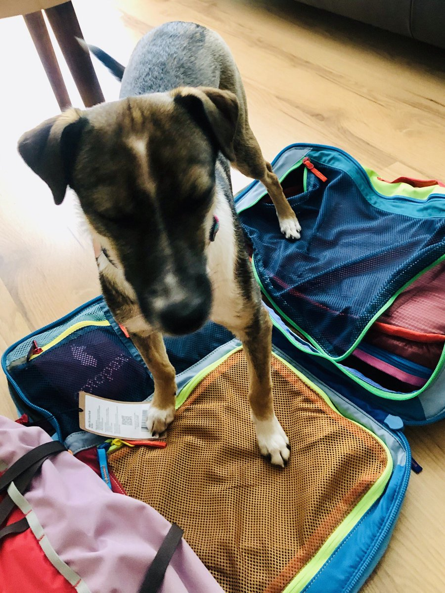 Alright, I'm ready.  Where are we going?  Oh, sigh...if only @cotopaxi #cantwaittotravelagain #whereintheworld <br>http://pic.twitter.com/JKfJboS8lN