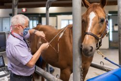 Capone, an Oldenburg warmblood, is back to his energetic self thanks to @UFVetMed.  Veterinary cardiologists at @UF's Large Animal Hospital helped treat his heart arrhythmia.    Read more from @UFHealth: https://t.co/z9H9StZBzP  (📷: Louis Brems) https://t.co/JoBDesJ1Td
