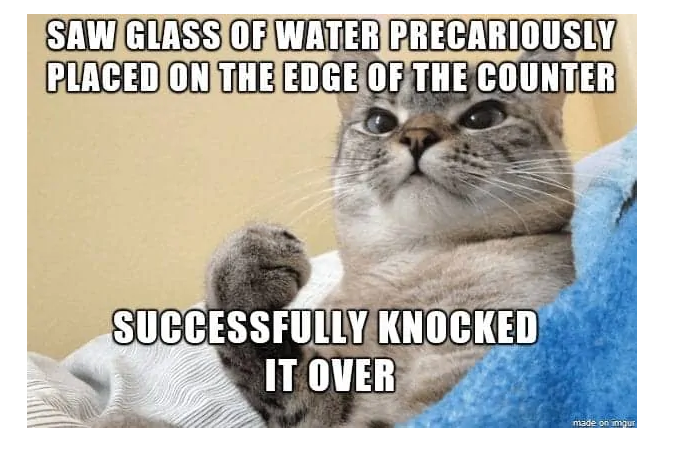 Ha ha! #catmemes #memeswithcats #humor #sillymemes #funnycats #ilovecats #catlovers #thegoodnewscafepic.twitter.com/cccWd9gsNM
