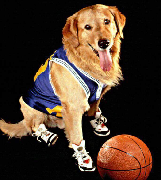 """#BreakingNews: The @Lakers yesterday submitted their list of players that will participate in the rest of the 2019-2020 season. In replacement of Dwight Howard, the Lakers have signed Buddy """"Air Bud"""" Framm for the remainder of the season. https://t.co/dWpBZPlnD1"""
