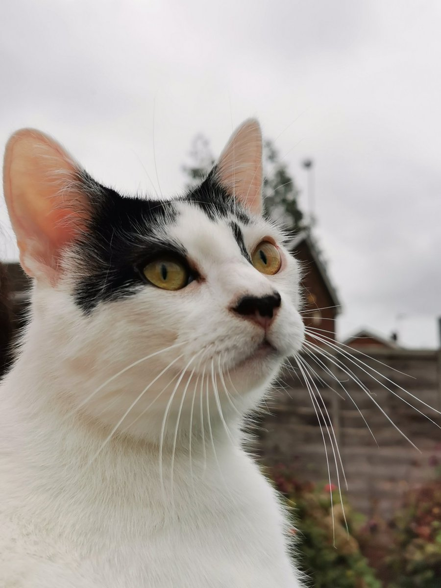 @thechrisbarron #CatsOfTwitter #Caturday https://t.co/laQZAtz3kn