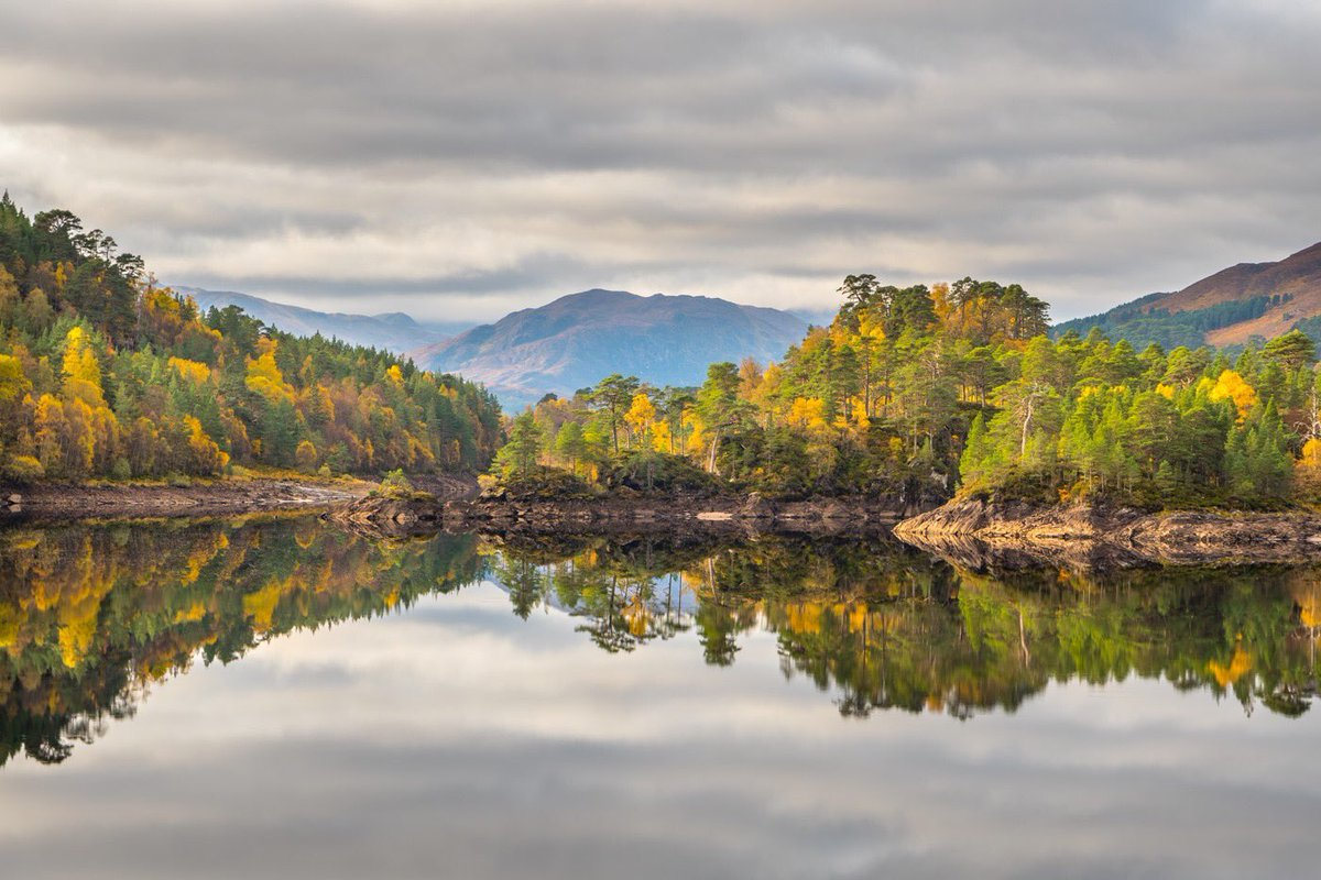 There's a nip in the air, the trees are golden, the dawn chorus replaced by the roaring of red deer stags, & quiet riverside pools provide sanctuary for salmon on their way to spawn. Autumn is a magical time in the Highlands. Escape to the Cairngorms: scotlandbigpicture.com/rewildingescap…