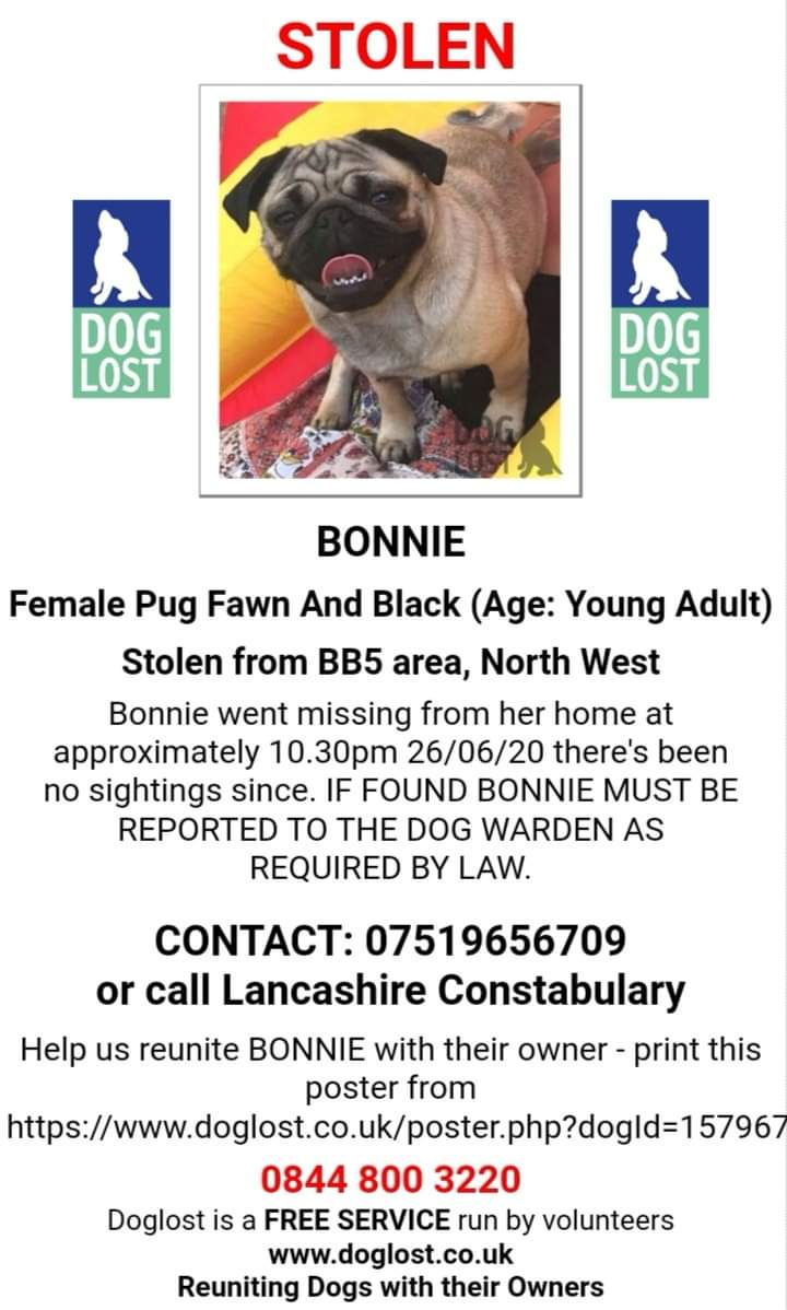 🐾🆘 #Lancashire LostDogAlert 🙏Help #findBonniePUG Young Adult PUG Still MISSING now believed STOLEN 😟 from Back Yard of Her Home in WOODNOOK area #ACCRINGTON BB5 at 10:30 pm on 26 JUNE 🙏Join facebook.com/groups/1524756… ANY INFO ? 🙏📱101 @LancsPolice or 07519656709 Thankyou