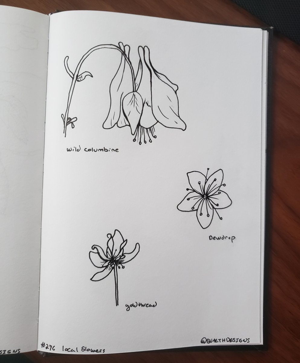 Sketch Daily - 276 - Local Flowers  #sketchdaily #localflowers #wildflowers #Adirondacks #adirondackdlowers #wildcolumbine #goldthread #dewdrop #flowers #botanical  #artprompts #artwork #pen #ink #drawing #illustration  #doodle #dailyartpic.twitter.com/Q80bJSHJYJ