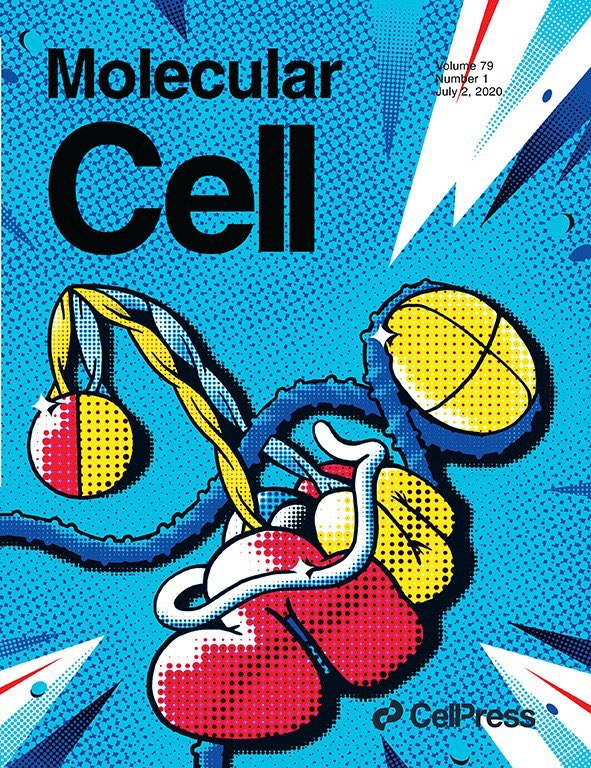 Paper out! And it got the cover! A manuscript on condensins by @VanniniLab - Head, Research Centre for Structural Biology - is featured on the cover of the July's issue of @MolecularCell by @CellPressNews https://t.co/stz8Jb6LsY