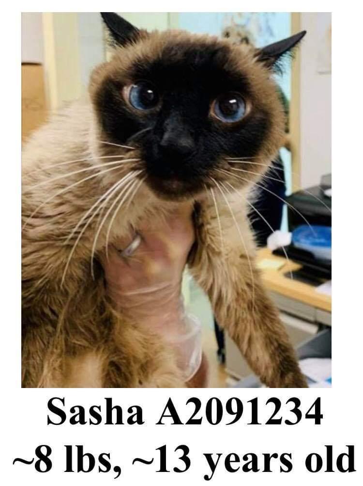 Gorgeous #senior SASHA is at URGENT CATS OF #broward, #FLORIDA. https://www.facebook.com/380410418689313/posts/3267667293296930/…pic.twitter.com/ygrV6sumjC