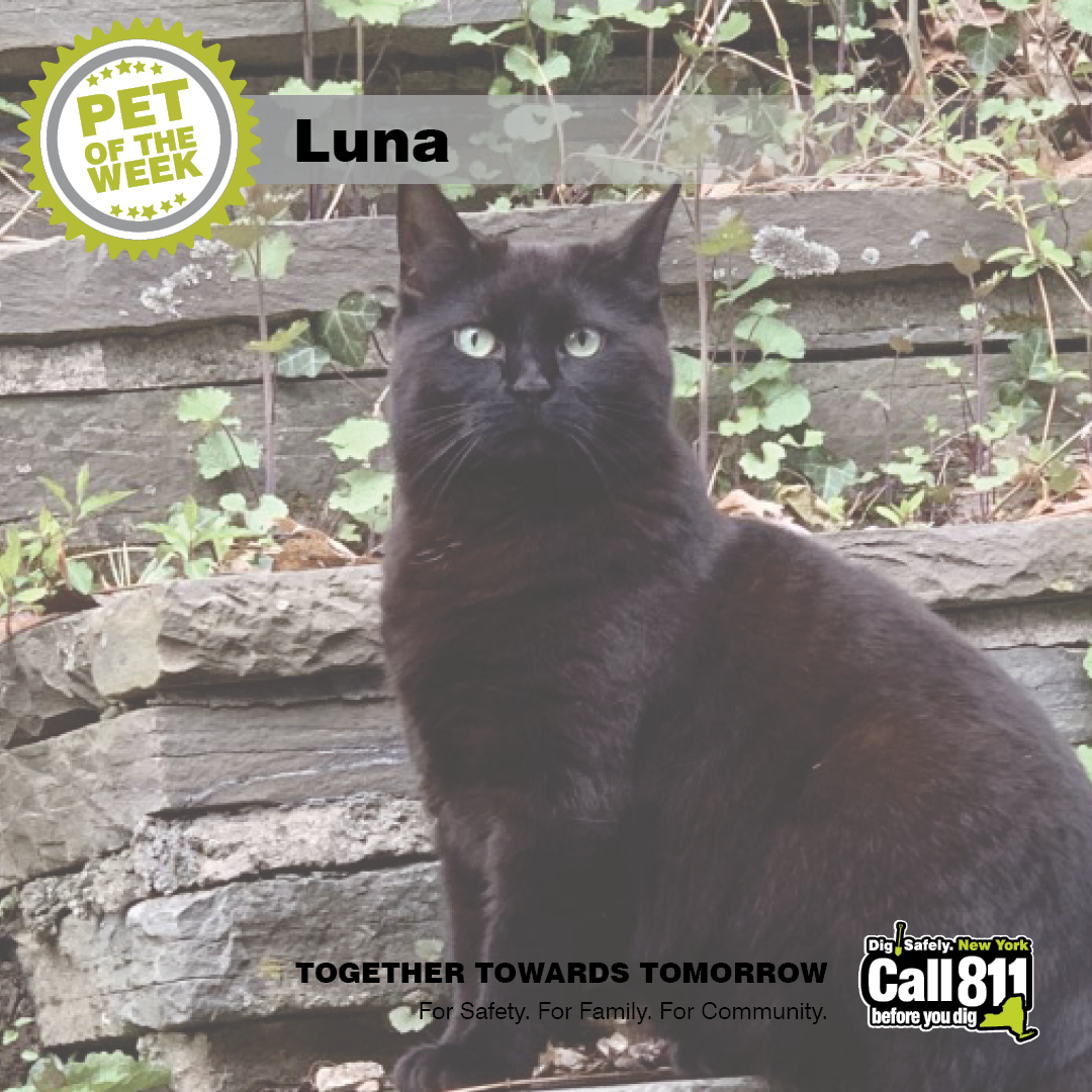 This week's Pet of the Week is Luna! Have a funny or cute pic of your furry friend? Send it to us…