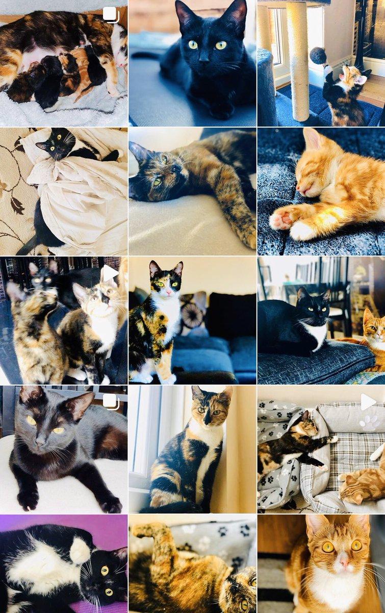 @BloggersHut Fur all the cute cat pics check out my Insta! (It's my furbabies 1st birthday today too!) 🥳🎂🎉 instagram.com/meowzineuk/ #BloggersHutRT #BloggersWanted