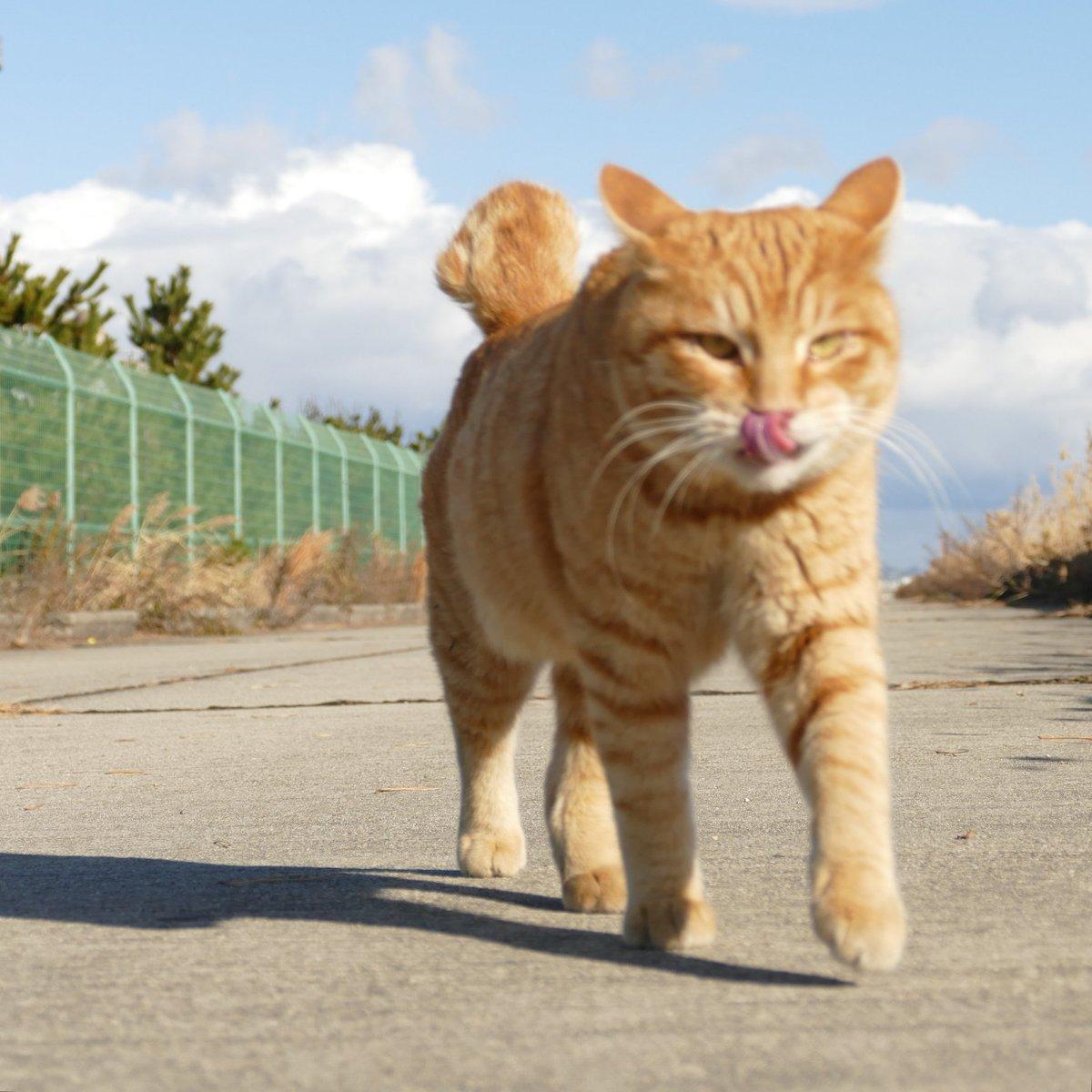 の 気持ち 野良猫 猫の気持ちいいところは?触ると喜ぶ6つの部分