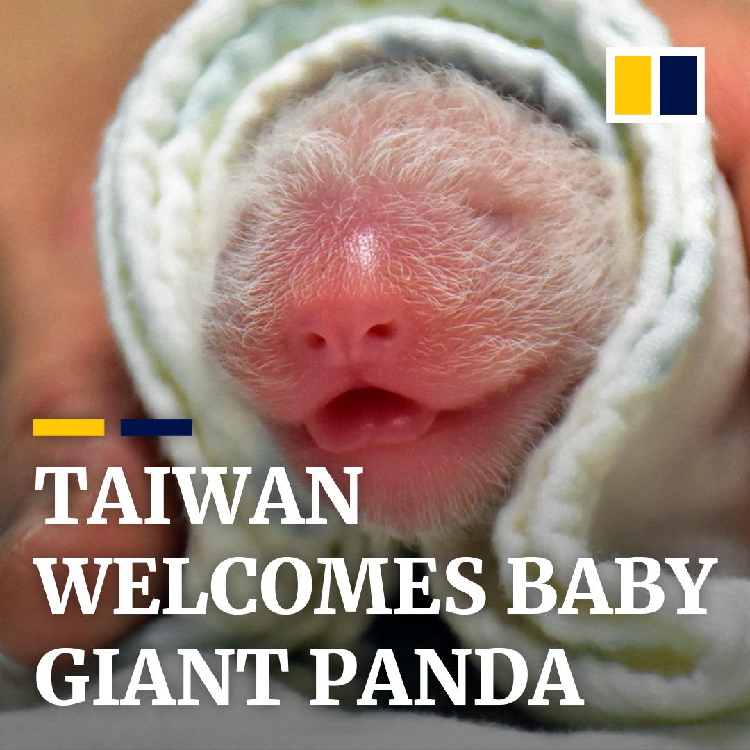 It's a girl! Giant panda Yuan Yuan, given by China as a gift to Taiwan, has given birth to her second cub. https://t.co/mZnlcpSJe2 https://t.co/vugaZnFZOO