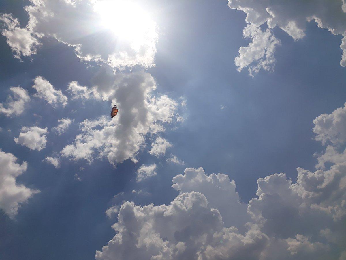 Beautifull nature  #photography #photographer #photo #PhotoOfTheDay #PhotosOfMyLife #NaturePhotography #nature #NaturalBeauty #naturelover #NatureGoneWild #clouds #cloudscape #sun #sunshinepic.twitter.com/PZcA8ZWQa4