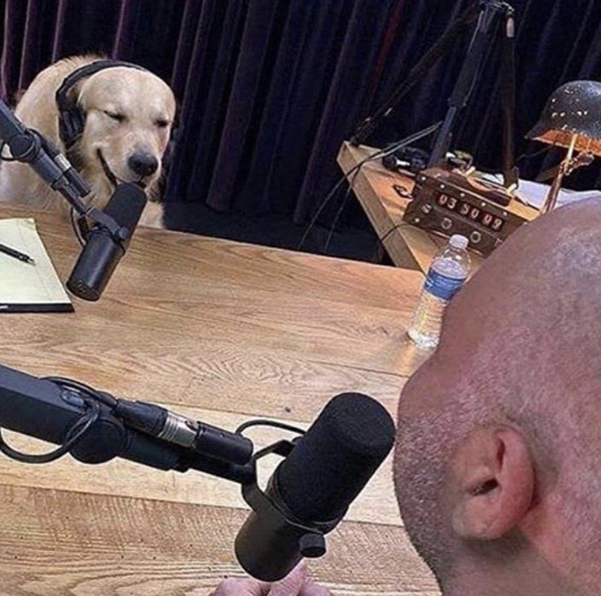 """yeah it's true I ate his homework so what"" https://t.co/8IpuQmVrfF"