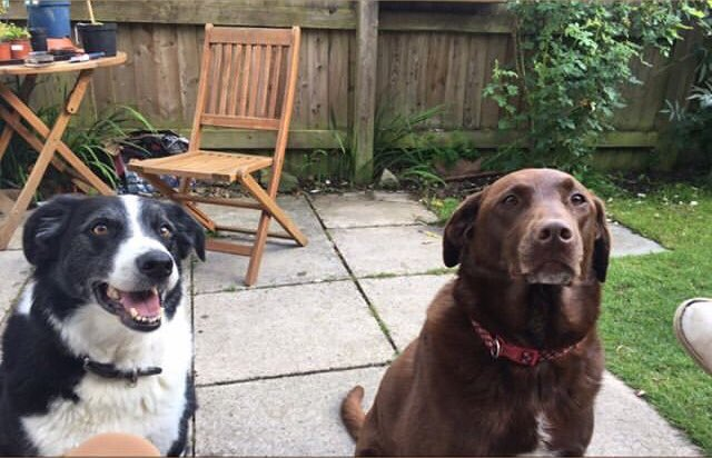 I have a doggo, and currently my sister has 2 doggies but I'm looking after one of hers atm (black and white is mine) pic.twitter.com/9A8akQh76P