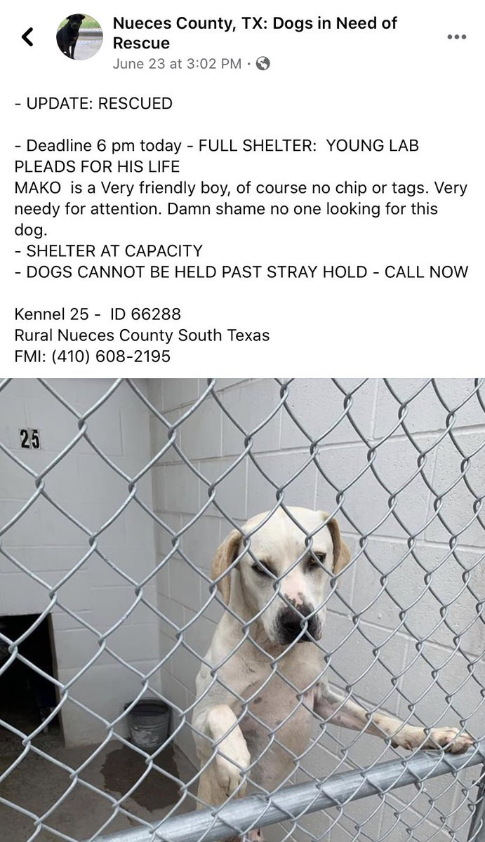 Please if anyone knows who rescued sweet Mako , let me know , I can't find the answer, all posts say rescued, and there has been no update for a week, no one answers the phone at Nueces Shelter 410-608-2195 , the mailbox is full, no one answered the message