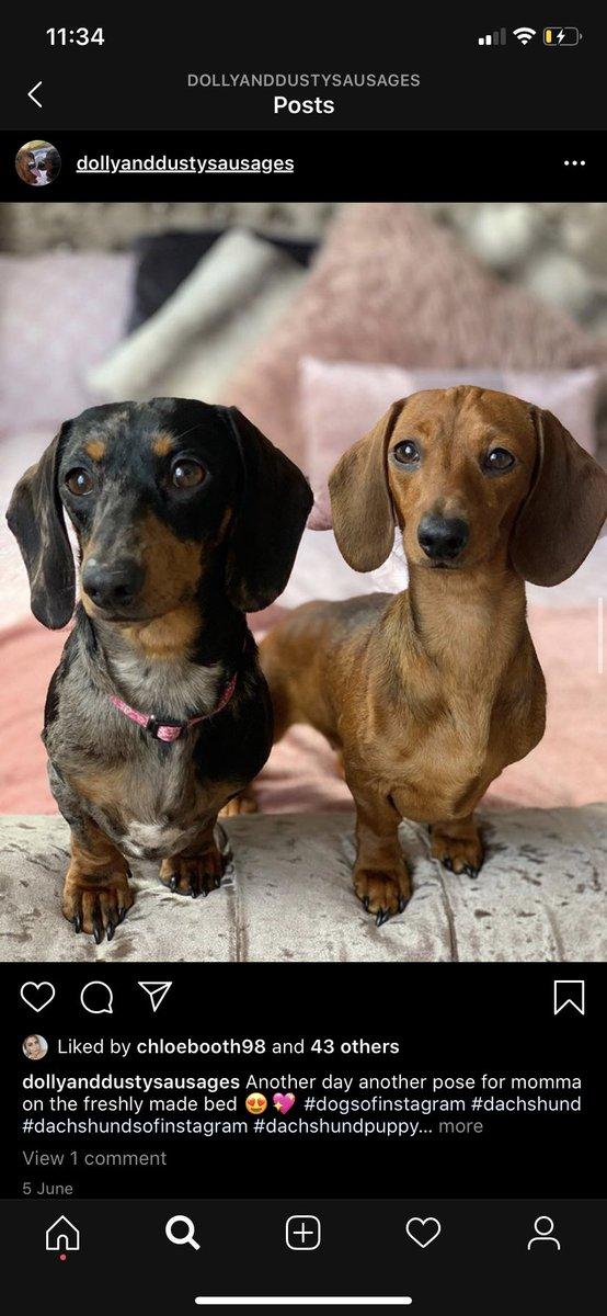 Follow my mates insta!! She's got the cutest doggies xx pic.twitter.com/OghAJgRUfw