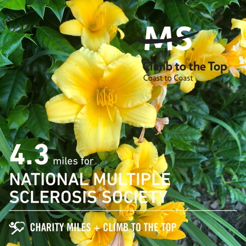 4.3 @CharityMiles for @mssociety. #ClimbToTheTop# it was an amazing day y'all <br>http://pic.twitter.com/abshhorUMS