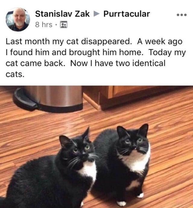 Meow that is a predicament. https://t.co/zLXNPBvYXV
