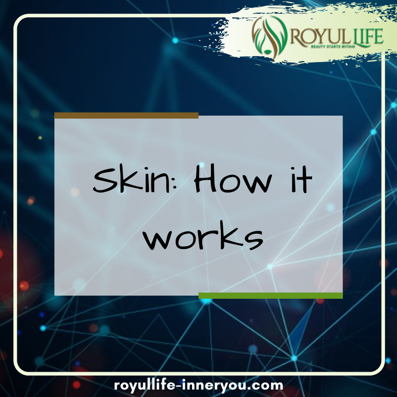 Read and find out how the skin truly works. https://www.medicalnewstoday.com/articles/320435  and Visit us on our website : https://www.royullife-inneryou.com/  #royullife  #inneryou   #organic #natural  #besthairvitamin  #longhair  #longnails pic.twitter.com/rAo3a5tqv0