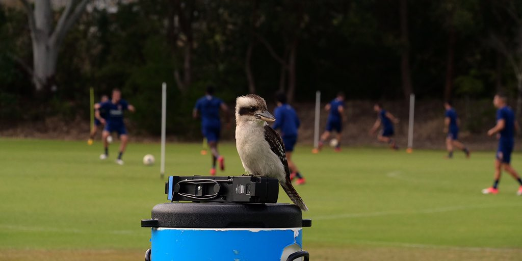 A visitor at training today 🦅 #MadeOfNewcastle https://t.co/f5fTRIsGBo