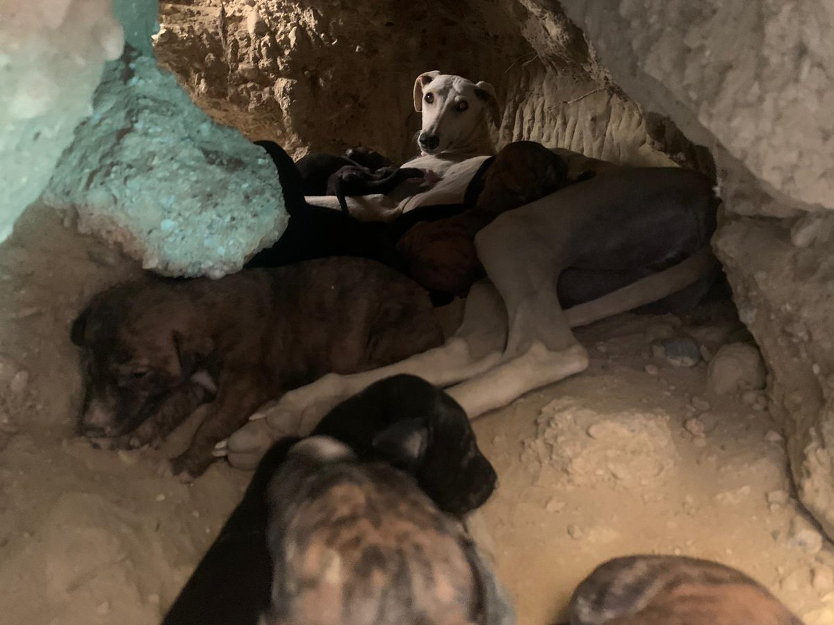 UPDATE❤️The dog & her pups from the mountains are SAFE❤️It was a long hard rescue in hot sun & difficult terrain but we got them. Mum cried, we cried, it was so emotional. PLEASE watch & share the video  & if you can spare a few €s