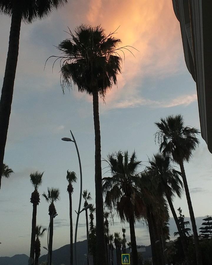 @cemalucaar Gökyüzü ve palmiyeler. Kendi çekimim. https://t.co/XCTbt51kZ5