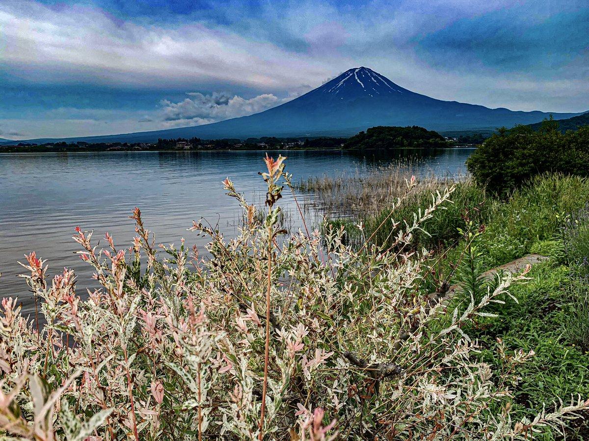 湖畔の花。 https://t.co/50JH9AvgSq
