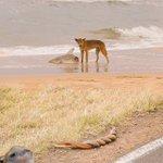 サメを襲いながら蛇の交尾を見てる犬を撮ろうとしたら映りこんだ主張の激しいカピバラの画像。情報量多すぎww