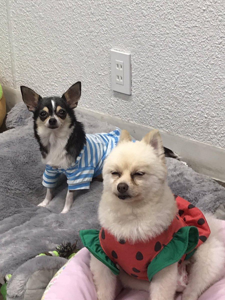 立川 保護 犬 カフェ