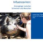 Image for the Tweet beginning: #Influenzaviren: Grenzgänger zwischen Schweinen und