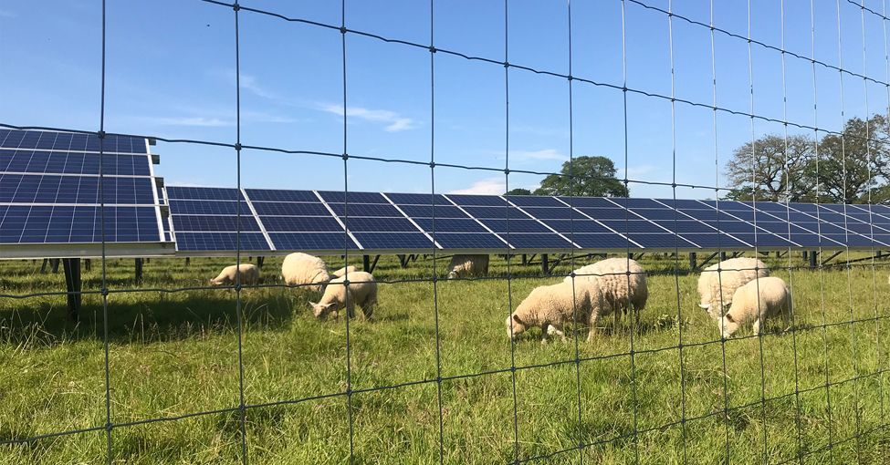 There's nothing bbaaaaad about a flock of sheep and a solar farm!! 🐑 yaleclimateconnections.org/2020/06/energy…
