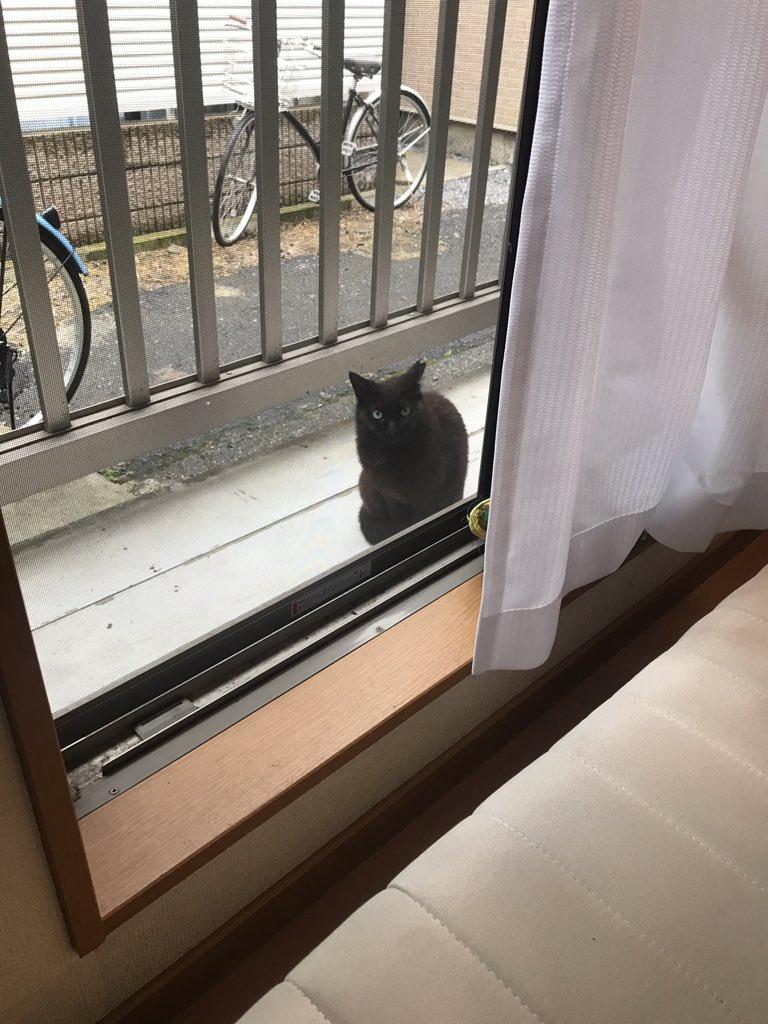 ベランダに来る猫に段ボールを与えたら?かわいい毛玉が詰まってたww