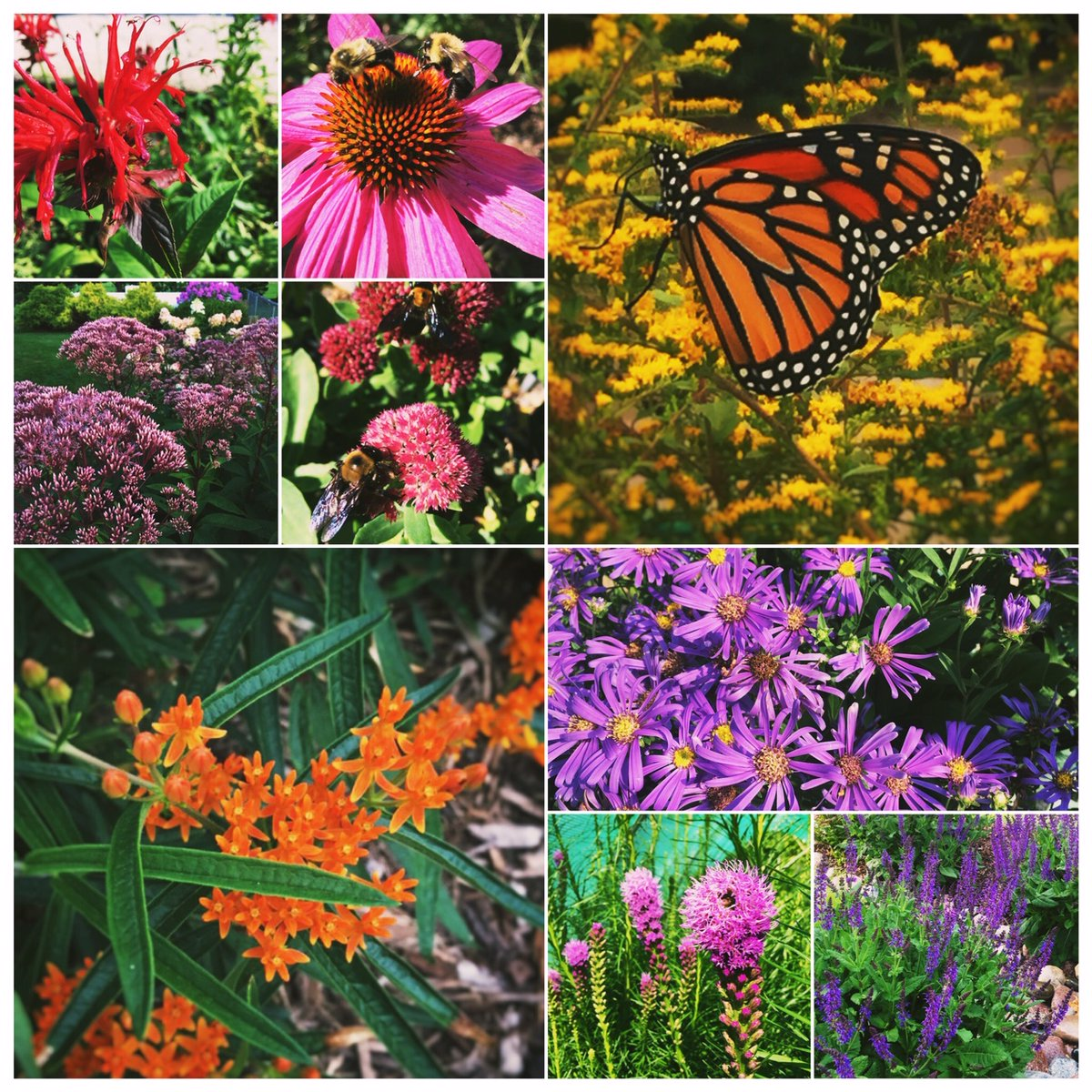 What will you plant to celebrate #NationalPollinatorWeek ?pic.twitter.com/ZcHqjmkEJL