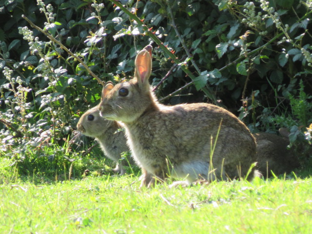 Today kept super still and the rabbits let me take pictures of them. 1/4