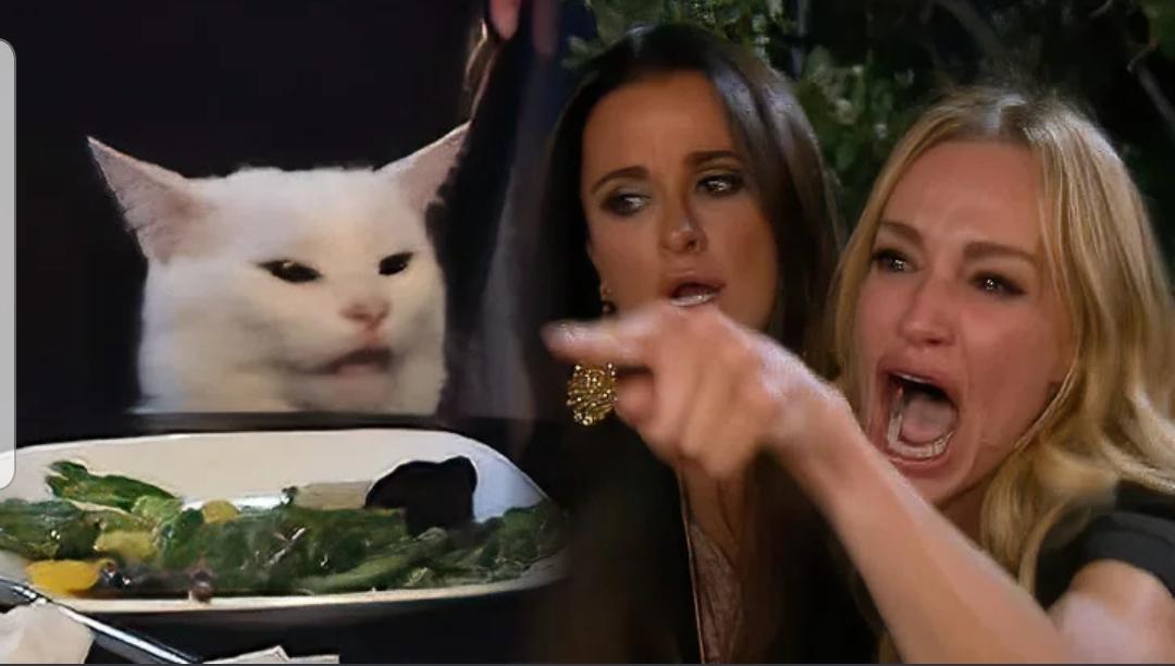 Картинка с девушками и котом мем