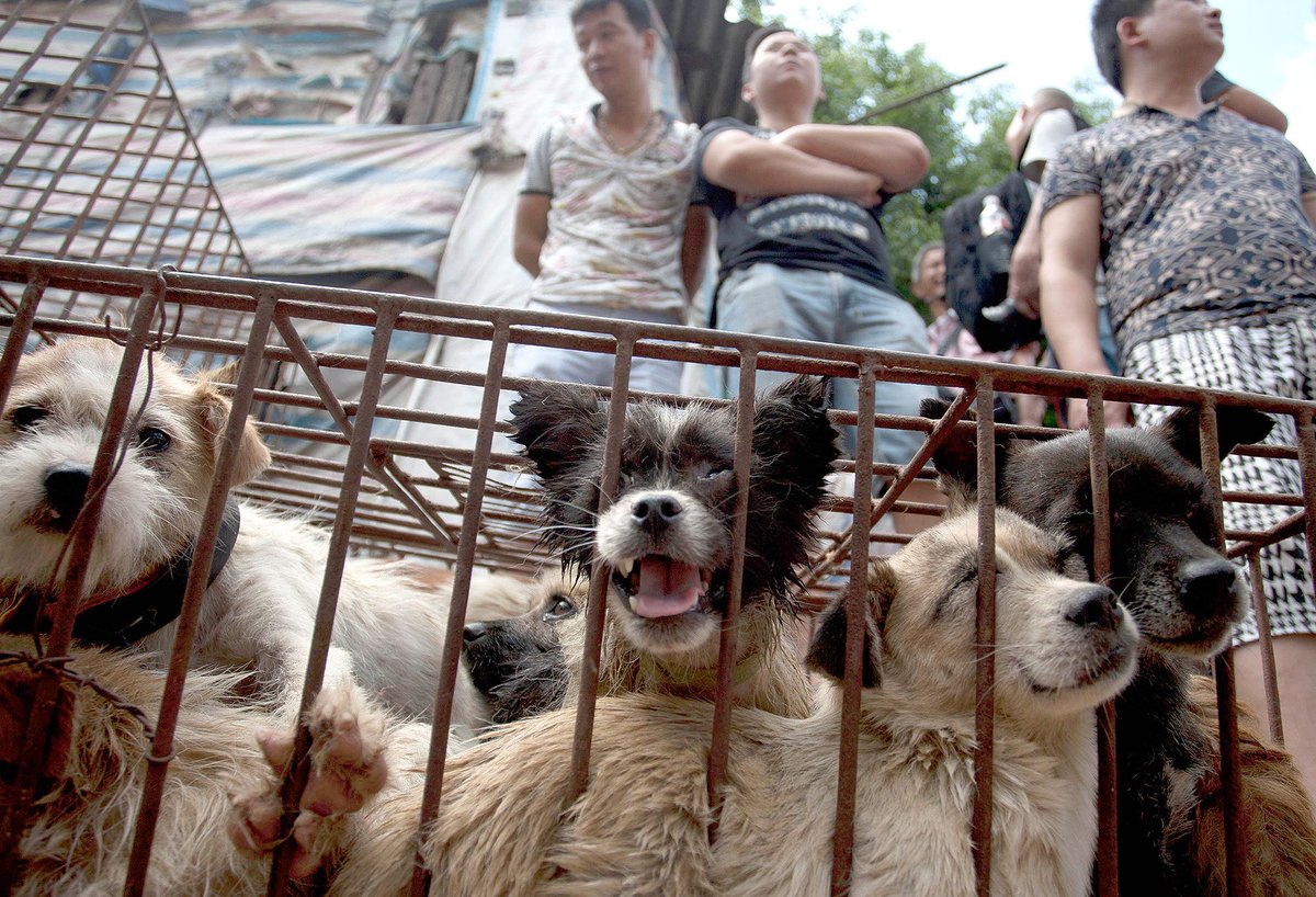 China's annual 10 day Yulin Dog Meat Festival has begun. Some people simply won't learn.