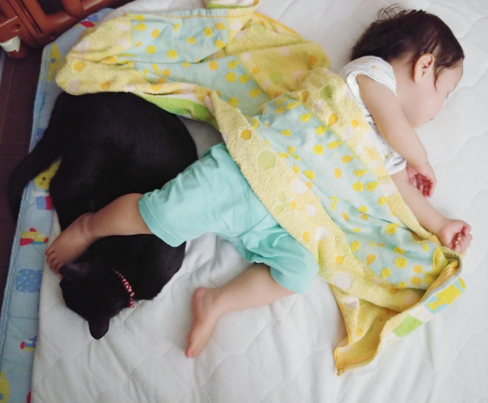 796日目。<br>朝、1歳児を起こそうと思って名前を呼んでいたら、寝惚けたのか足がモゾモゾ動き…そのまま黒猫の上にのそっと乗っかった。が、黒猫は1歳児の足程度の重みでは動じないのかもはやご褒美なのか特に反応なく、そのまま寝続けた。ちょっと見ていたかったが仕事に遅れても困るので双方起こした