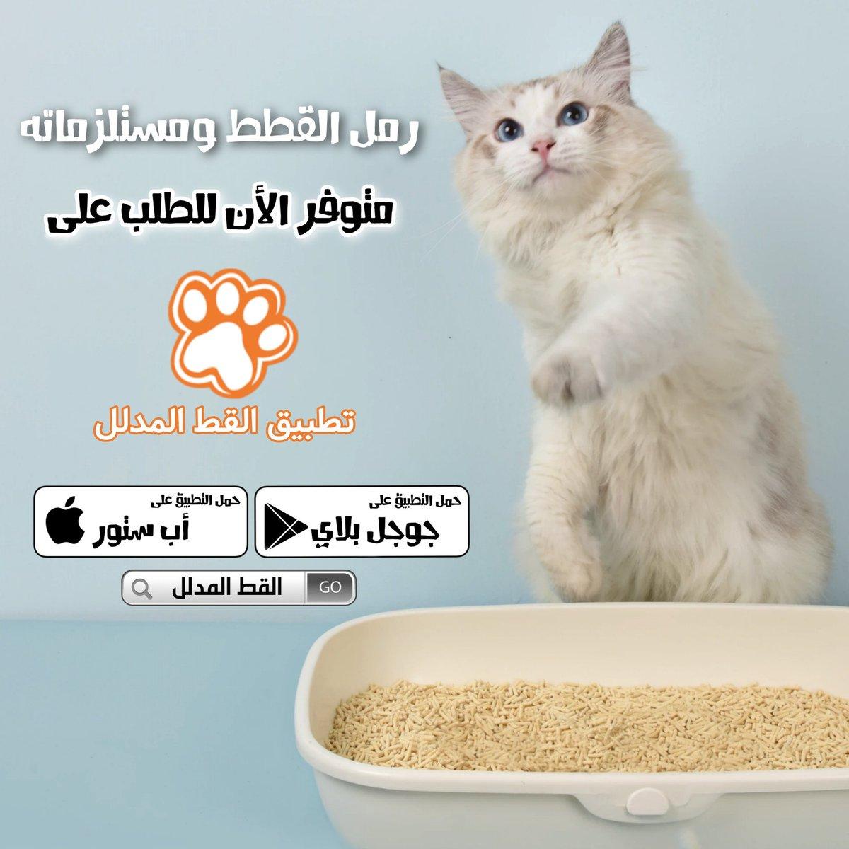 Cute Cat Cutecat43378872 Twitter