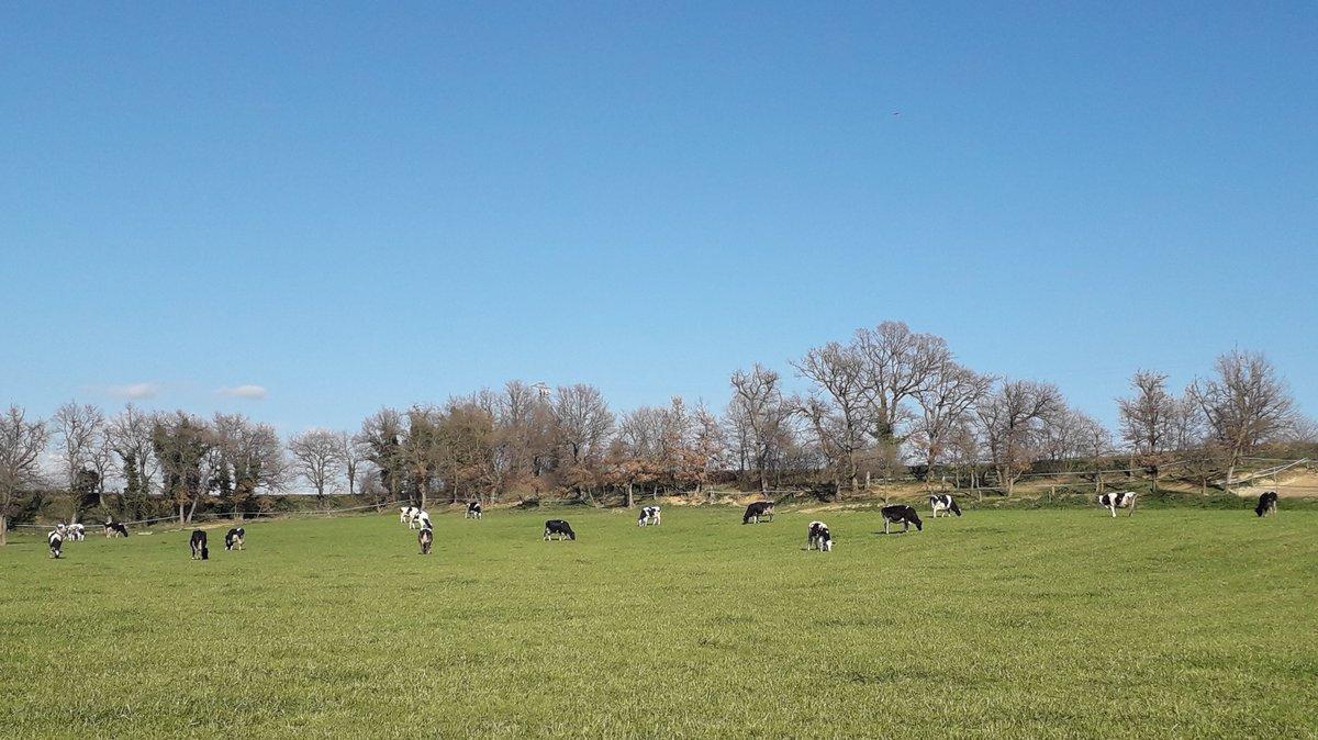 Avui hem acabat les auditories de #benestaranimal en boví de llet.  Els nostres #ramaders produeixen la #llet segons els protocols del Welfare Quality. https://t.co/DtEKl6bnGG