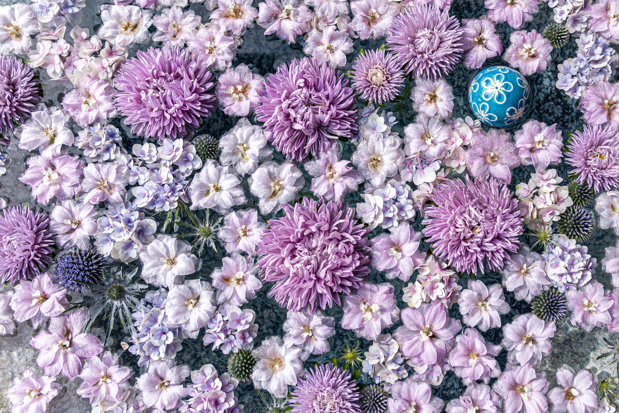 埼玉にもあった!「花手水」行田八幡神社の美しい花たち!