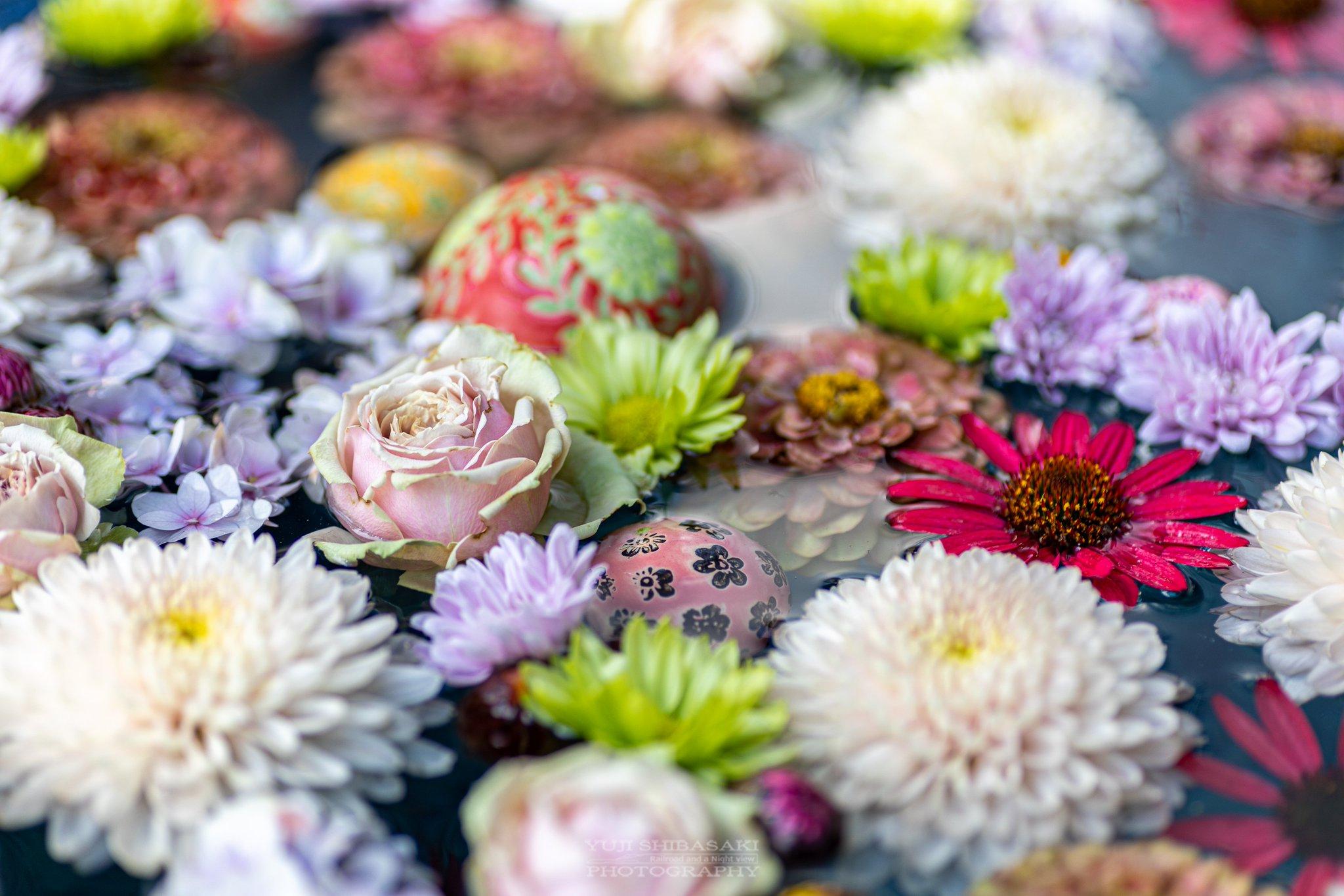 行田八幡神社の花手水。<br><br>西日本ばかりかと思っていましたが埼玉にもありました。