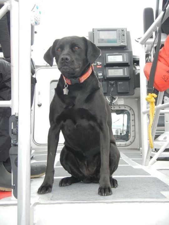 Last week, Coast Guard Station Saint Ignace mourned the loss of Onyx, the Station's Labrador Retriever mascot and the subject of a number of children's books. Onyx passed away surrounded by crew members and loved ones Fair winds and following seas, shipmate