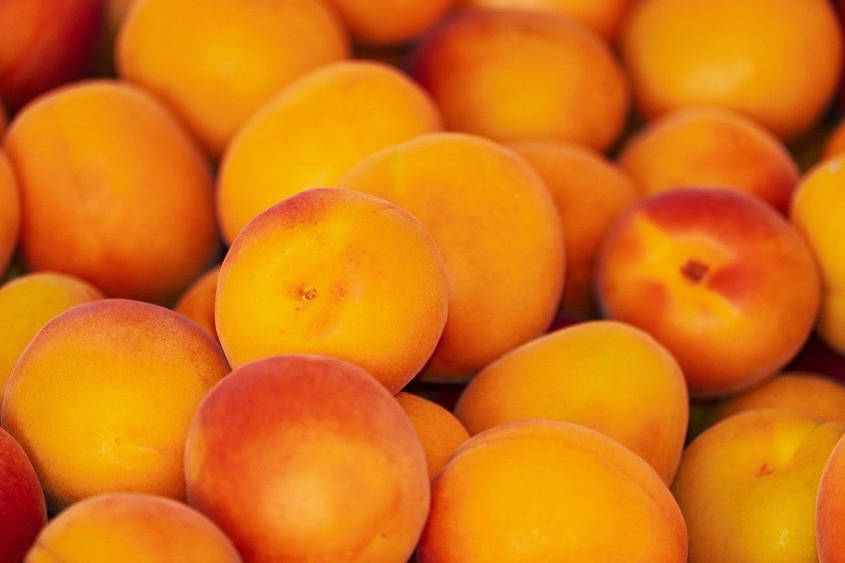 Apricots have many health benefits such as ability to treat indigestion, constipation, earaches, fevers, skin diseases, cancer and anemia. Furthermore, apricots have the ability to improve heart health, reduce cholesterol levels, treat respiratory conditions. #apricots #5-a-day https://t.co/RDT9X4XW73